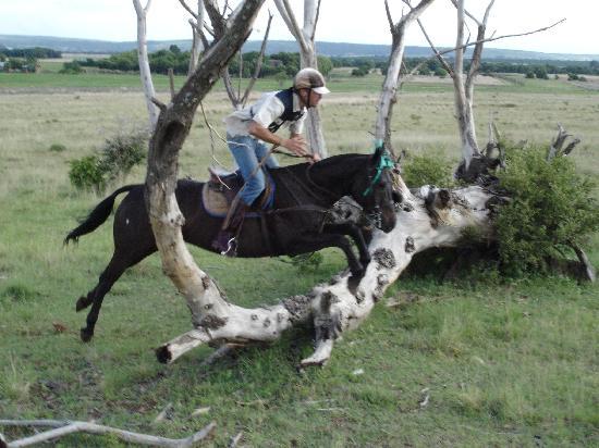 Horseback Africa (Pretoria, South Africa): Top Tips Before ...