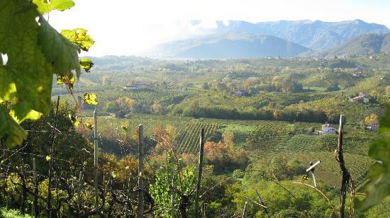 Azienda Agricola Col del Lupo: Scorcio panoramico dal parco sul vigneto