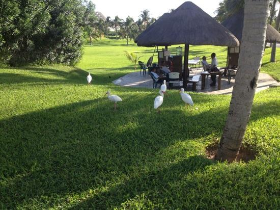 Marriott Cancun Resort : security