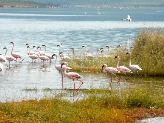 Lake Bogoria Spa Resort: Lake Bogoria National Park
