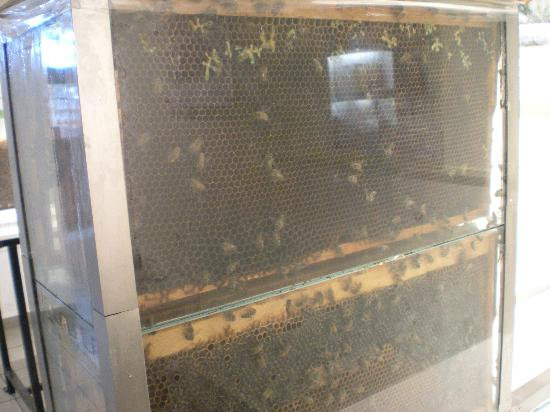 Bee Museum: glass bee hive