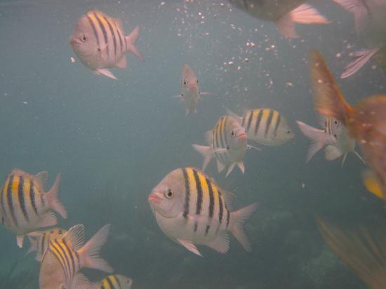 Grand Sirenis Riviera Maya Resort & Spa: Snorkeling at Grand Sirenis