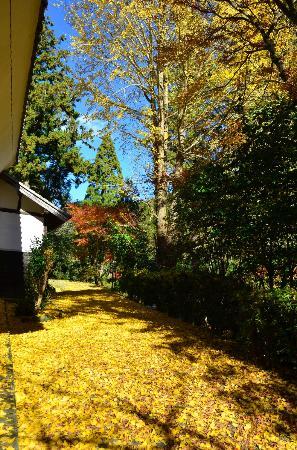 Daitoin Temple: 大洞院の紅葉