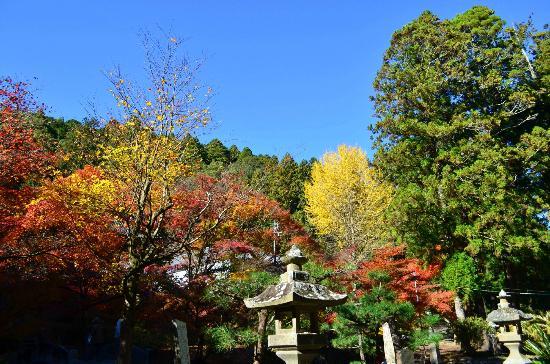 大洞院の紅葉