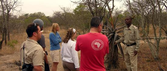 African Budget Safari: Out for a walk in the veld