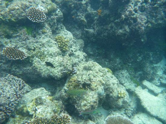 Barrier Beach Resort: More snorkelling at Champagne Beach