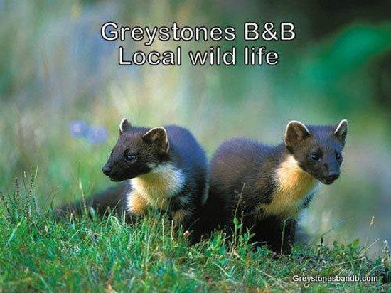 Greystones B&B: Local wild life