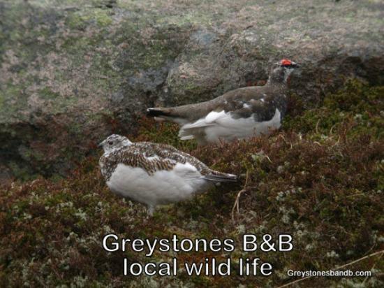 Greystones B&B: Local bird life