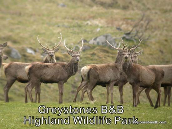 Greystones B&B: Highland Wild Life Park