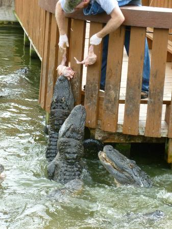 Gatorland: Entertainment