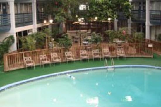Koko Inn: Amenities Pool