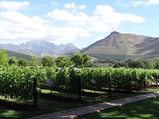La Motte Wine Estate  Culture of Excellence  South