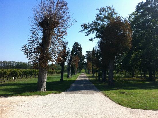 Chateau Lavergne-Dulong - Chambres d'hotes: Nice walk around the vines!