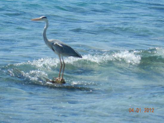 Kuramathi Island Resort: вид из номера