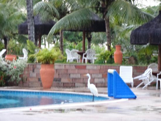 Portobello Praia Hotels and Resorts : Uma garça na piscina do Hotel