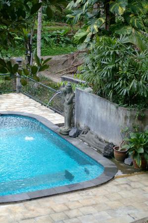 Narasoma Homestay: Serenity at the pool