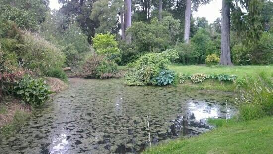 Mairenui Rural Retreat: the garden pond....