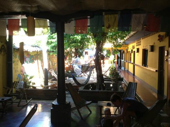 Hostal La Tortuga Booluda: Beautiful Common Area with hammocks and tropical plants