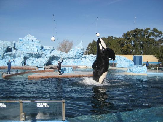San Clemente del Tuyu, Argentina: Espectáculo con la Orca