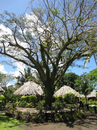 Paradise Taveuni: Immaculate gardens!