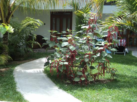 คอย เดอ ไมร์ แอททิจูด: hotel garden