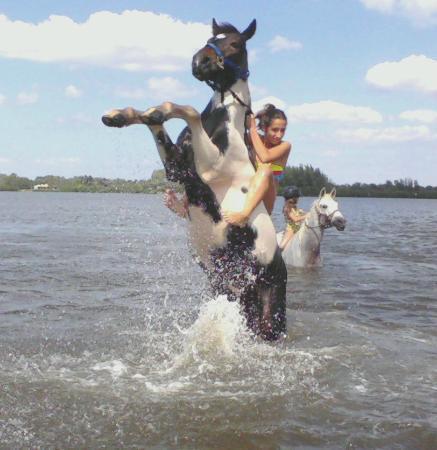 Sandy Hooves Horse Adventures Bradenton 2019 All You