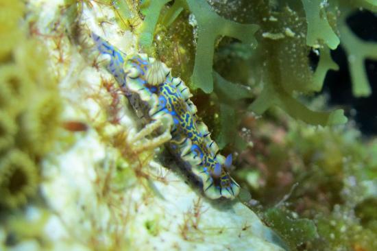 Dive BVI: Sea Goddess