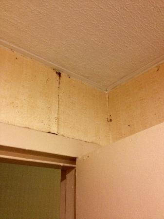 Ramada Limited Calgary Northwest: Black mold in the bathroom