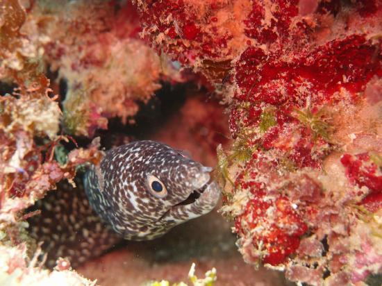 Jamaica Scuba Divers Ltd.: Moray Eel