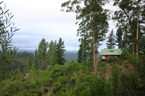 Phantom River View Cabins: Lulama - In the forest