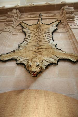 Umaid Bhawan Palace Jodhpur: Tiger on Wall