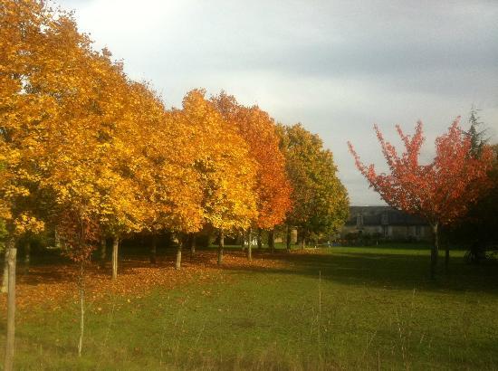 Chateau de Vaumoret : Le parc en automne