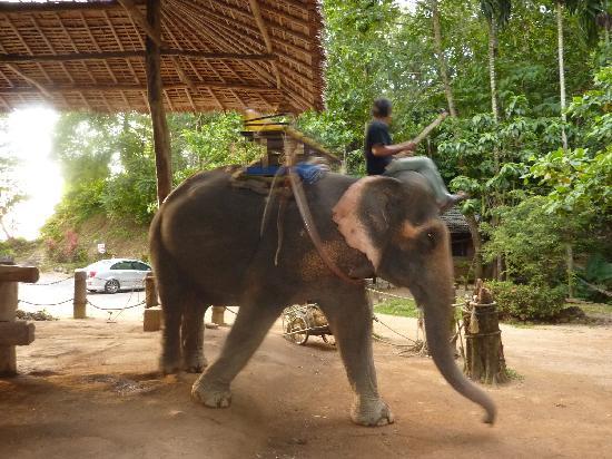 Kok Chang Safari Elephant Trekking: schreckliches Erlebnis:-(
