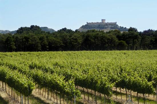 Vistas de los viñedos y castillo de Peñafiel desde Bodegas Legaris - Fuente: Tripadvisor