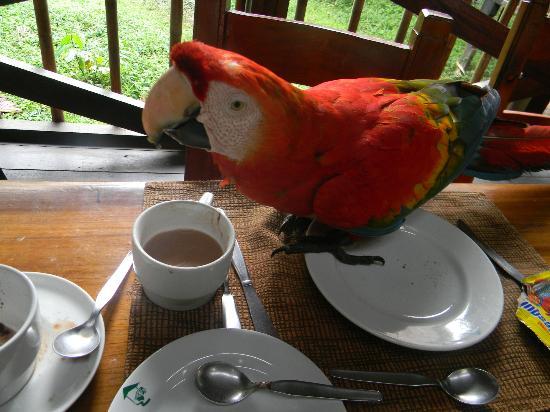 تامبوباتا ريسيرش سنتر لودج: Macaw joining us for lunch 