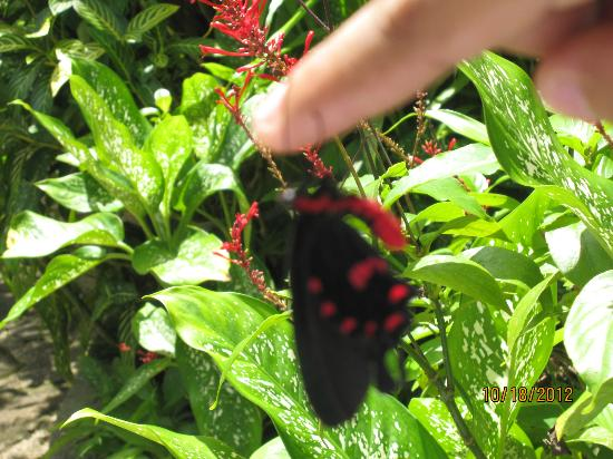 Can-olin Butterfly Sanctuary: Held by a butterfly!