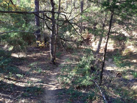 Buescher State Park - Pine Gulch Loop