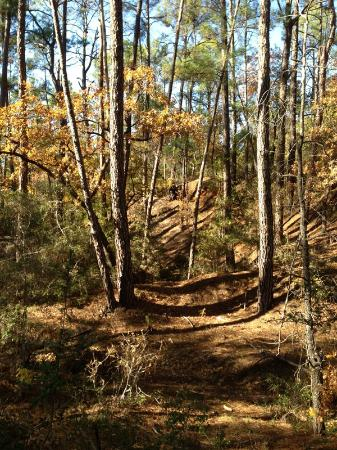 Buescher State Park - CCC Crossover trail