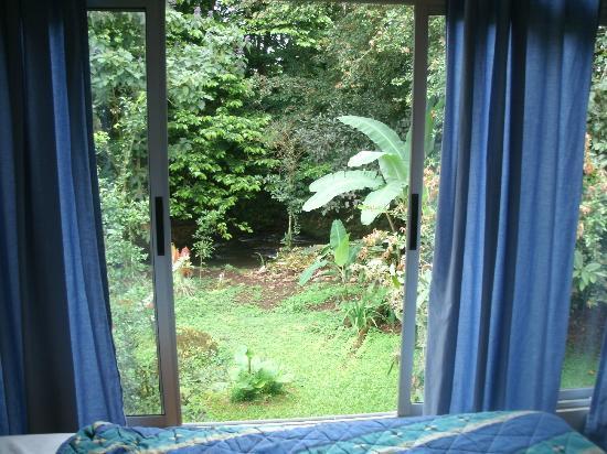 Eco Arenal Hotel: Desde la habitación se ven las aves, ardillas y más!!