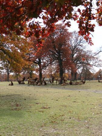 Woolaroc Museum & Wildlife Preserve: Elk herd at the Woolaroc Wildlife Preserve