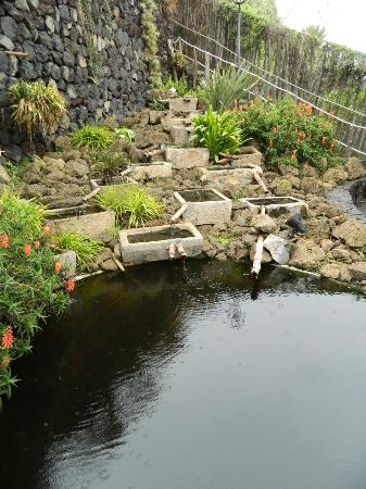 Jardin acuatico risco bello kuva jardin aquatico for Jardin acuatico