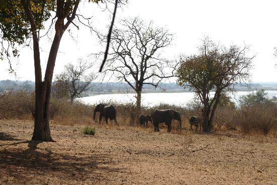 Imbabala Zambezi Safari Lodge: Elephants wandered into the property area