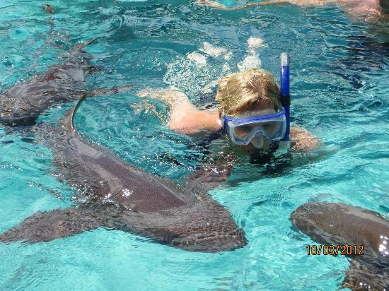Coastline Adventures Exuma Snorkeling With Sharks