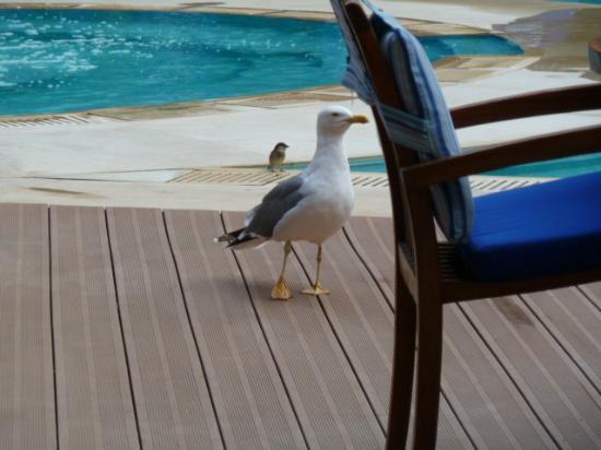 Le Medina Essaouira Hotel Thalassa Sea & Spa - MGallery Collection: Seagulls for breakfast 