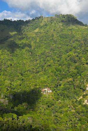 Villa Mareas: View of the Rain Forest around Marea