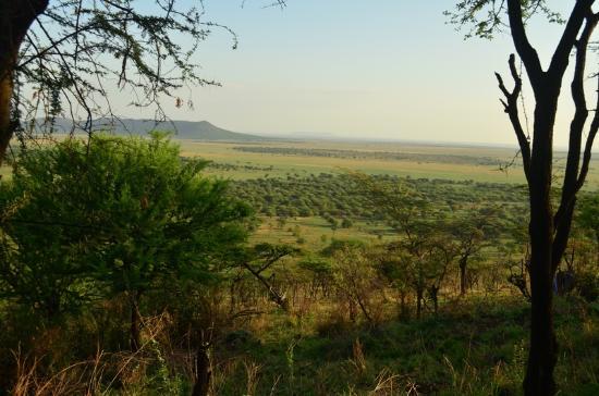 Serengeti Serena Safari Lodge: Vista a partir do Hotel