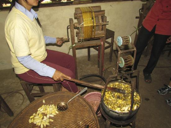 Angkor Silk Farm: Pulling the silk from the cocoon