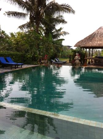 Gayatri Bungalows: pool and sorrounding! very lush