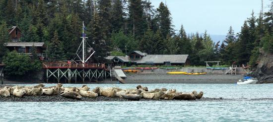 Kachemak Bay Wilderness Lodge : Seals & the Lodge