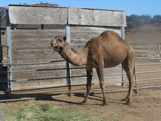 Oasis Camel Dairy : friendly